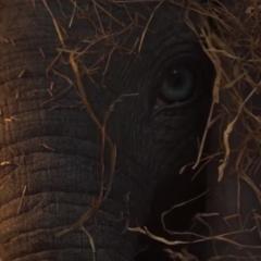 Disney: Teaser del live-action de 'Dumbo'